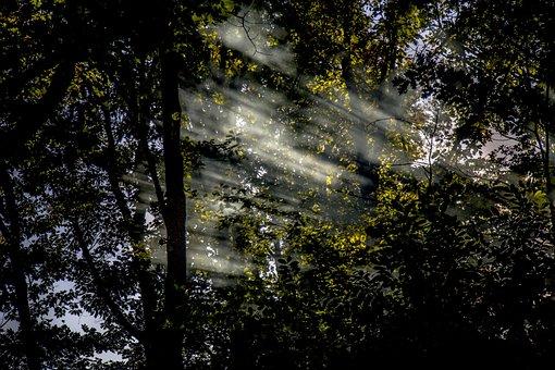 Sun, Rays, Nature, Landscape, Forest, Light, Sunset