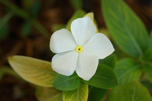 Flower, Macro, Nature, Plant, Summer, Spring, Garden
