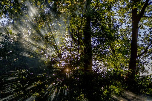 Sun, Forest, Nature, Landscape, Trees, Light, Heaven