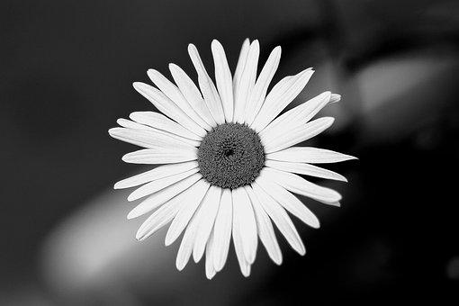 Flower, Garden, Black And White, Nature, Plant, Petals