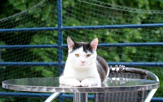 Cat, Café, Outdoor Terrace, Recreation