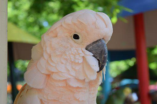 Parrot, Pink, Bird, Animal, Outdoor, Park, Nature