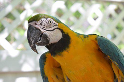 Parrot, Macaw, Bird, Animal, Outdoor, Park, Nature