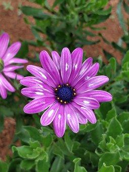Flower, Flora, Nature, Garden, Blooming, Floral, Petal