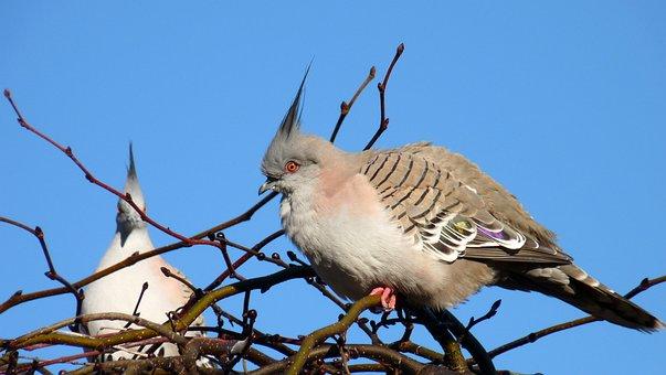 Birds, Pigeons, Nature, Wildlife