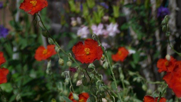 Flowers, Garden, Colours, Blossom, Plant, Petals, Flora