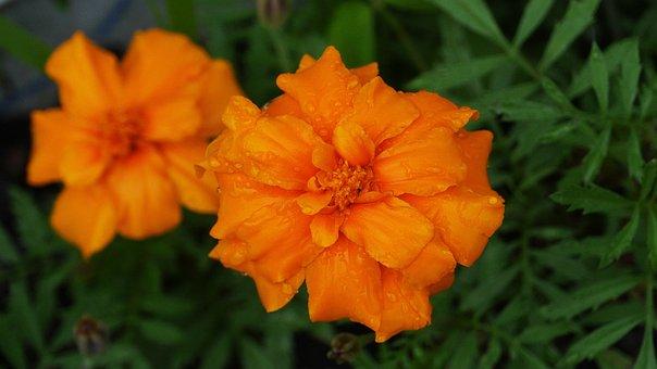 Flowers, Vermilion, Nature, Plants, Summer, Beautiful