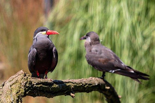 Bird, Plumage, Nature, Animal, Animal World, Feather