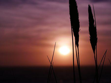 Sunset, Beach, Summer, Holiday, Water, Sea, Sky, Ocean