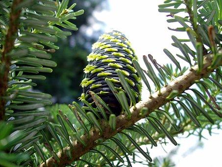 Tap, Pine Cones, Close Up