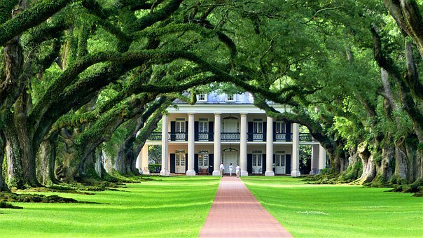 Nature, Plantation, Louisiana, America, Green, Plants
