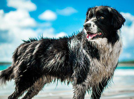 Dog, Beach, Vacation, Animal, Sand, Sea, Nature, Pet