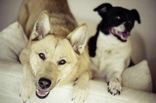 Dogs, Animals, Pets, Shy, Eager, Cute, Adorable