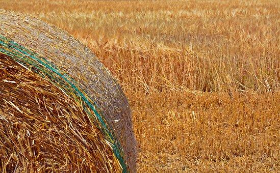 Straw Bales, Cereals, Barley, Agriculture, Harvest