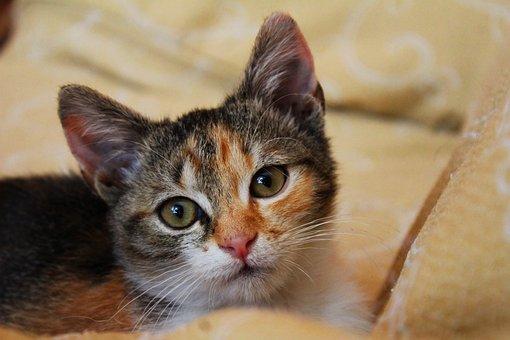 Cat, Mammal, Pets, Kitten, Cute, Nature