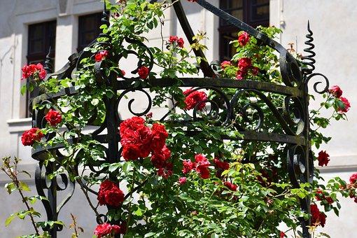 Rose, Fountain, Castle, Czechia, Courtyard, Historical