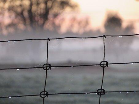 Winter, Wire, Drop, Frost, Fence, Wintry, Metal
