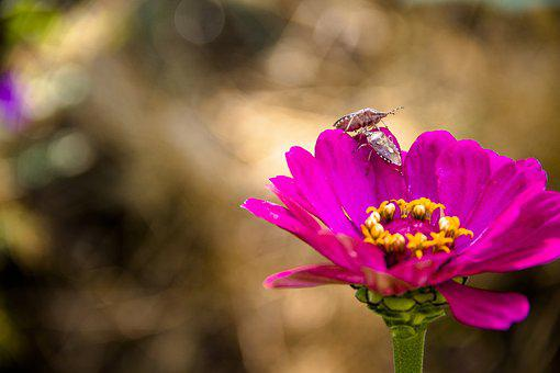 Bug, Beetle, Nature, In The Summer Of, Insect, Flower