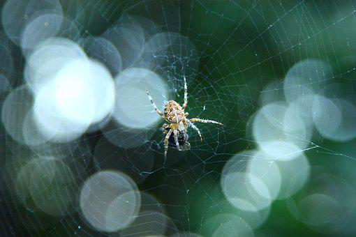 Spider, Insects, Arachnophobia
