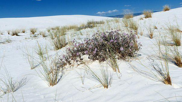 Sands, Dunes, Gypsum, Nature, Landscape, Desert, Dry
