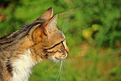 Cat, Mieze, Kitten, Tiger Cat, Domestic Cat, Pet