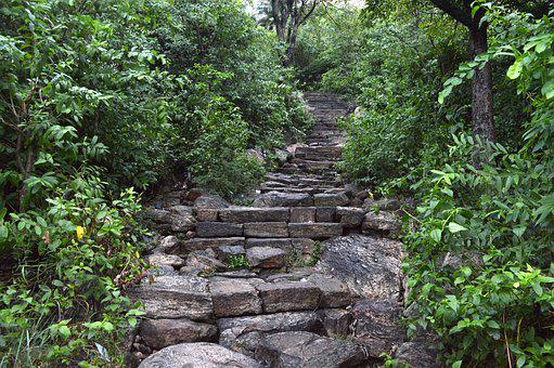 Forest Steps, Nature, Natural, Mountain, Woods, Stone