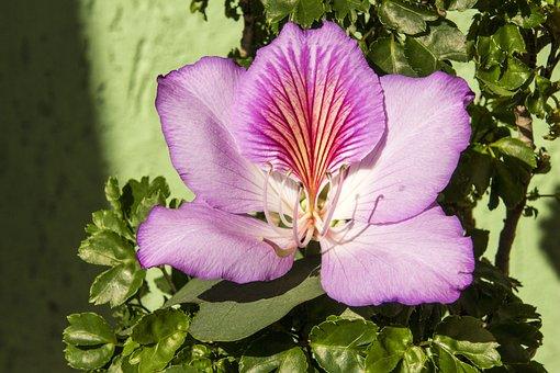 Flower, Purple Flower, Nature, Plant, Flowers, Spring