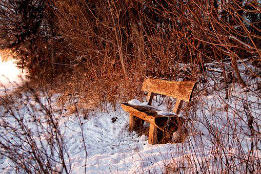 Bank, Sit, Forest, Snow, Winter, Loneliness, Nature