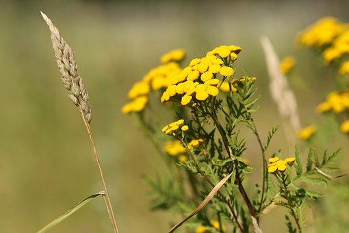 Wild Flower, Summer Flower, Nature