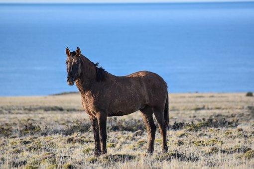 Horse, Sea, Wild, Nature, Equestrian