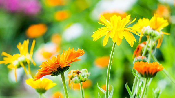 Flowers, Green, Nature, Outdoor, Spring, Bloom, Plant