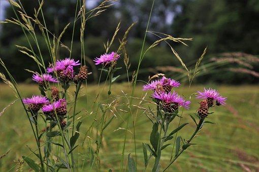 Grass, Thistles, Meadow, Summer, Plant, Figure, Herbs
