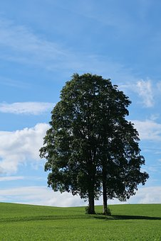 Summer, Sky, Nature, Landscape, Clouds, Rest, Meadow