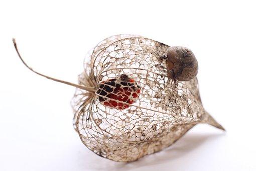 Snail, Macro, Plant, Dried, Close Up, Animal, Slowly
