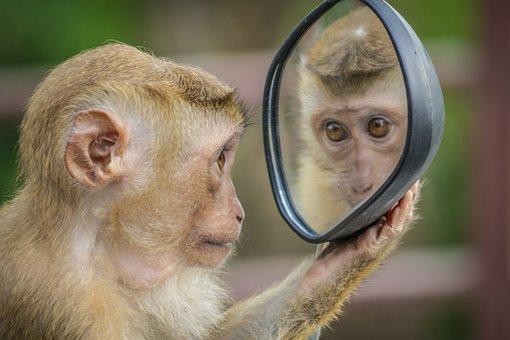 Monkey, Mirror, Stare, Thinking