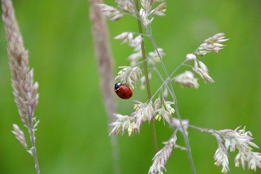 Animal, Fauna, Flora, Ladybug, Beast, Insect, Red Beast