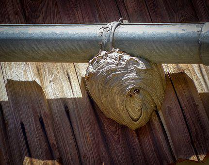 The Hive, Nest, Gutter, Wasps, Wood, Animal, Insect