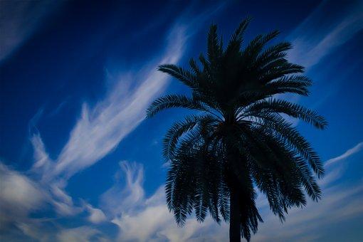 Tree, Blue Sky, Blue Sky And Tree, Best Sky, Best Tree