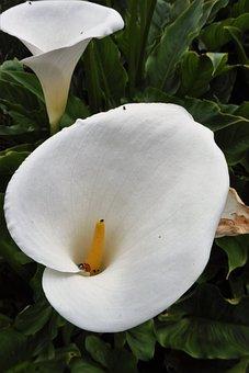 Lilies, Ladybird, White, Garden, Summer, Bloom, Ladybug