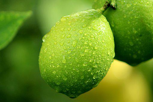 Lemon, Lime, Fruit, Tree, Citrus, Yellow, Green