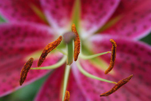 Pink, Flower, Blossom, Bloom, Plant, Close Up, Nature