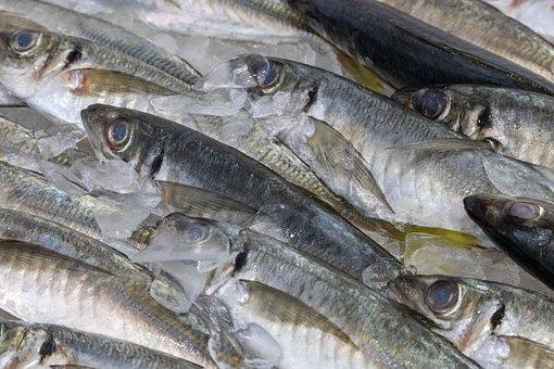 Fish, Market, Closeup, Food, Fresh, Eat, Seafood