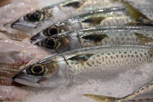 Fish, Market, Food, Fresh, Eat, Sea, Seafood