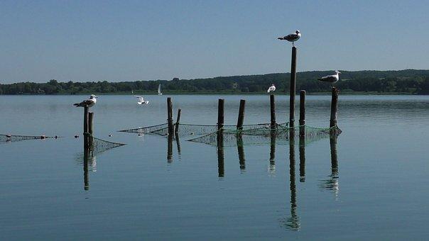 Fishing Net, Fish, Fishing, Networks, Gulls, Seagulls