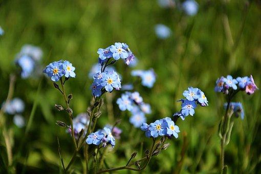 Wildflowers, Spring, Nature, Flora, Purple Flowers