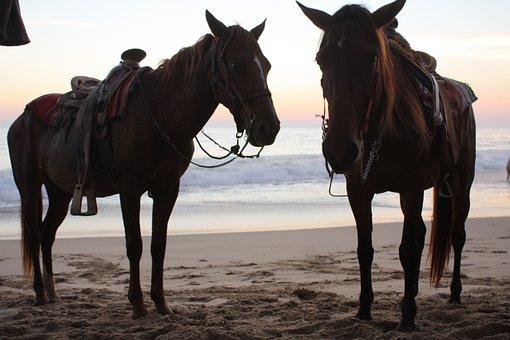 Horses, Sea, Sun, Ocean, Coast, Animal, Nature