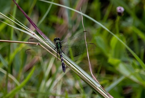 Dragonfly, Wings, Grass, Insect, Nature, Creature