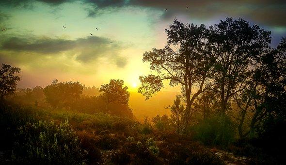 Sunset, Forest, Nature, Landscape, Sky, Evening, Trees