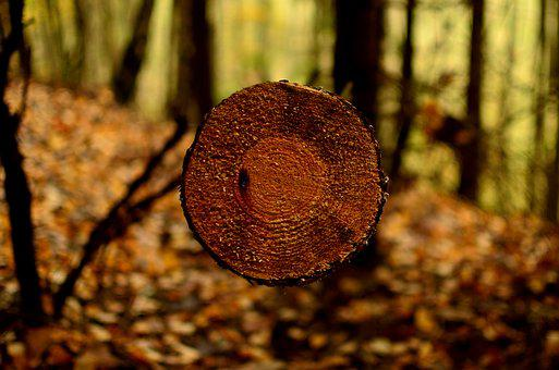 Forest, Autumn, Nature, Collapse, Forests, In The Fall
