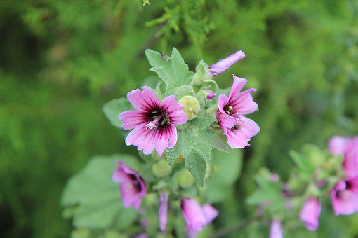 Flower, Flowering, Wild Flowers, Nature, Plants